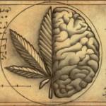 THC: Principio Activo y ¿Moral?