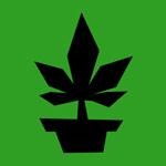 Cannabis Legal ¿tráfico o cultivo de derechos?