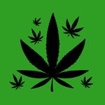 Un triunfo para las libertades civiles: Cámara aprueba despenalización de cultivo y uso de la marihuana