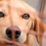 Mascotas: ¿comprar o adoptar?