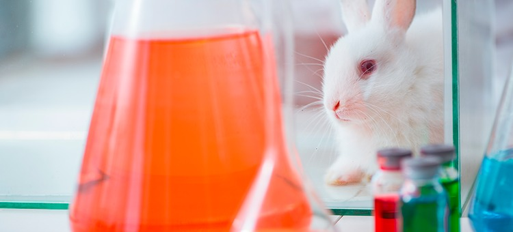 Cruelty Free: Una ley a favor de los derechos animales