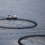 Desafíos de la industria salmonera: desarrollo socioeconómico y sustentabilidad