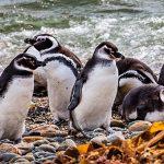 Patagonia amenazada